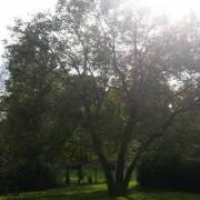 075-weinbergkoppel-baum